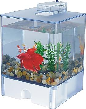 AA Caja de Aqua Betta 2 Acuario: Amazon.es: Productos para mascotas