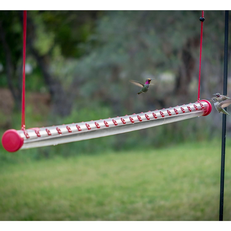 hummingbirds hummingbird purposeful gallon to attract one garden feeder a how