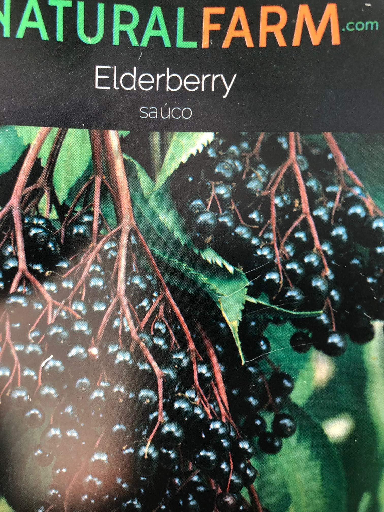 Elderberry Sambucus nigra Live Plant 2' Tall with Leaves in 4.5'' Pot Grown organically, Quality Assurance, Will Fruit in 2019 by A Natural Farm & Educational Center