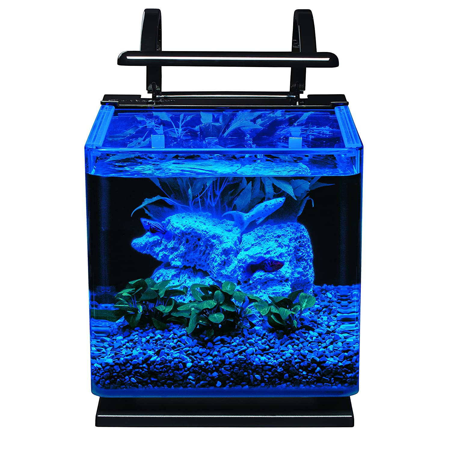 Fish aquarium just dial - Amazon Com Marineland Contour Glass Aquarium Kit With Rail Light 3 Gallon Pet Supplies Pet Supplies