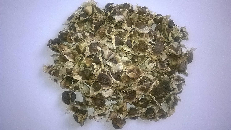 5.000 Samen -moringa oleifera- *Auch Meerrettichbaum genannt*