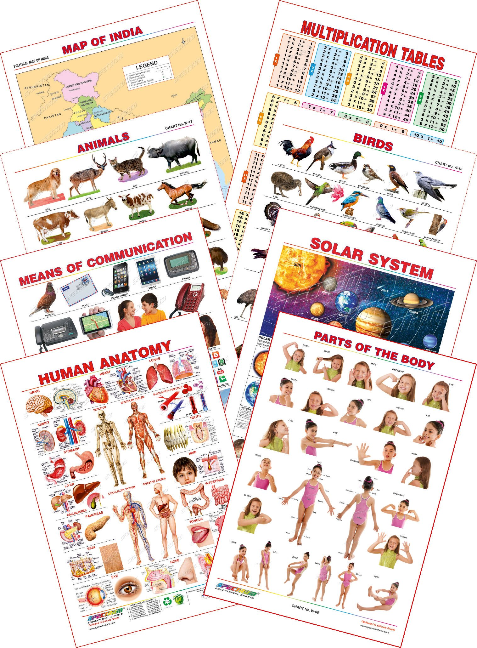 Buy Spectrum Educational Mini Wall Chart Set Of 8 Set 30 Human