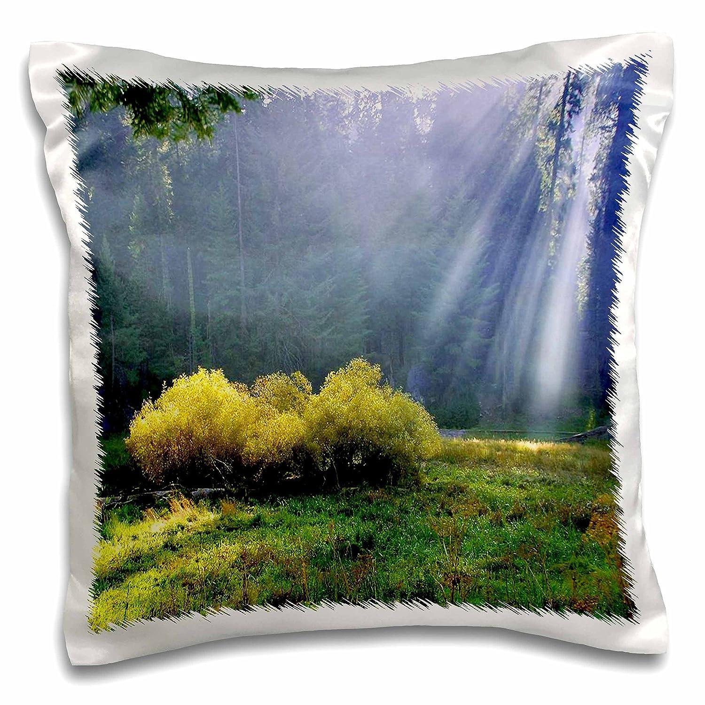 3D Rose pc/_57598/_1 Famous Sequoia Park California Pillow Case 16 x 16