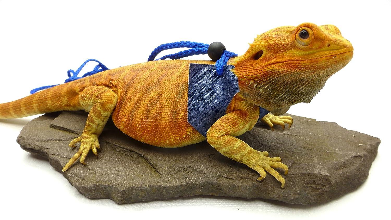 Large size Ogle Lizard Leash, Limited Edition bluee Web (Large Size)