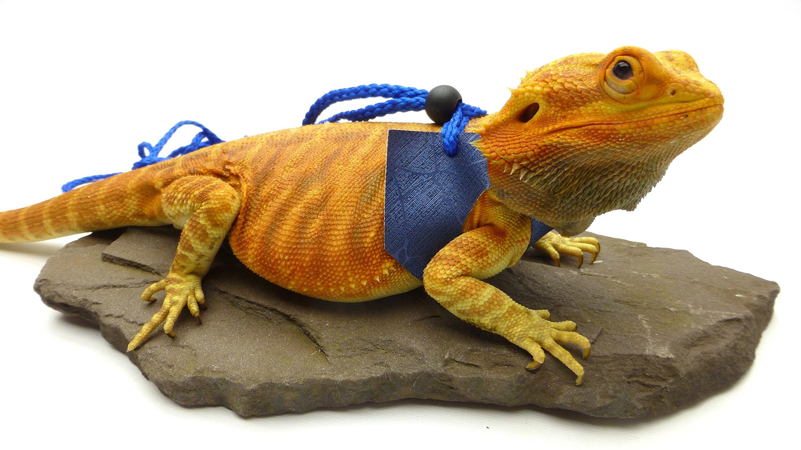 Ogle Lizard Leash, Limited Edition Blue Web (large size)