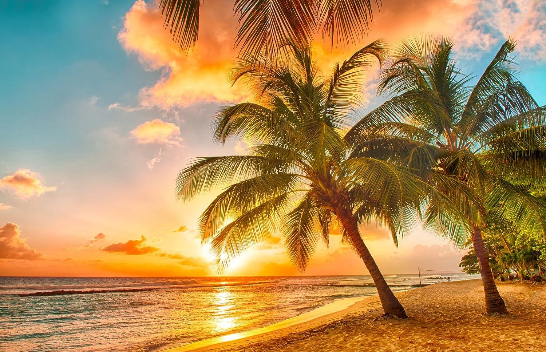 Papier peint photo mural intissÉ v barbade plage de palmiers