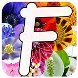 Giardinaggio - piante da fiore