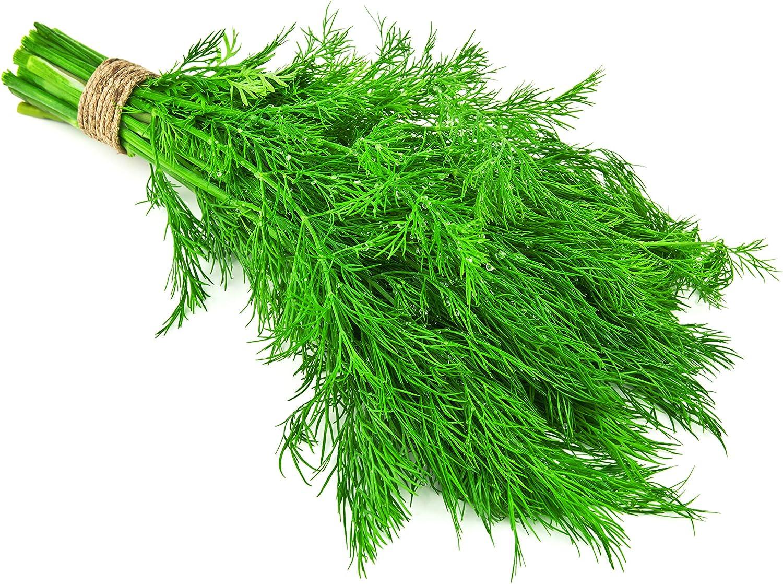 Amazon.com : Dill, Dwarf Fernleaf - Herb Seeds : Dill Plants ...