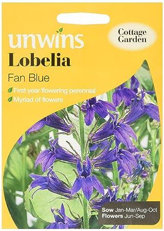 Unwins Lobelia Fan Blue Seeds Amazoncouk Garden Outdoors
