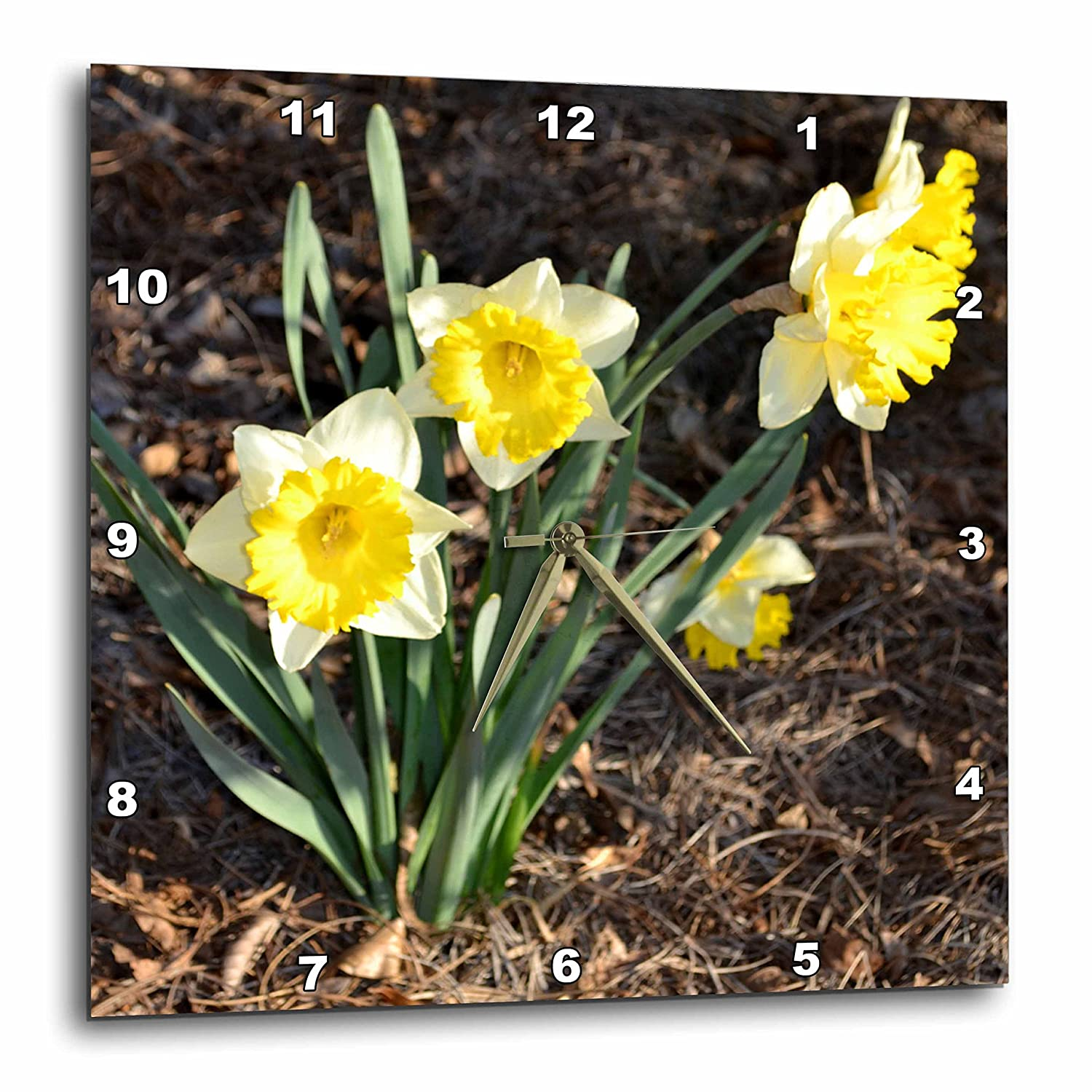13 by 13-Inch 3dRose dpp/_110105/_2 Beautiful Spring Daffodils-Wall Clock