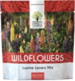 Lupine Wildflower Seeds - Large 1 Ounce Packet - Over 1,200 Annual and Perennial Mixed Lupine Flower Seeds