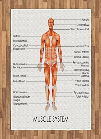 Amazon Human Anatomy Area Rug By Ambesonne Muscle System