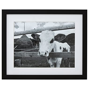 Black and White Curious Cow Photo Wall Art Décor - 18  x 22  Picture Frame, Black