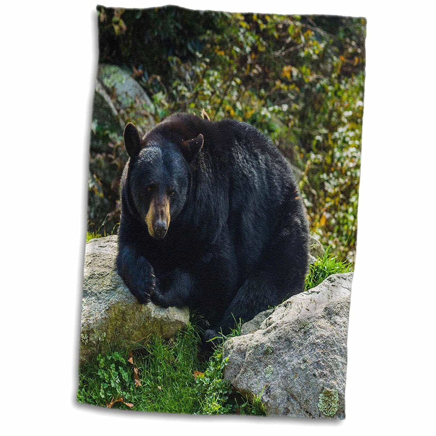 3D Rose North Carolina-Grandfather Mountain State Park-Black Bear Hand Towel 15 x 22