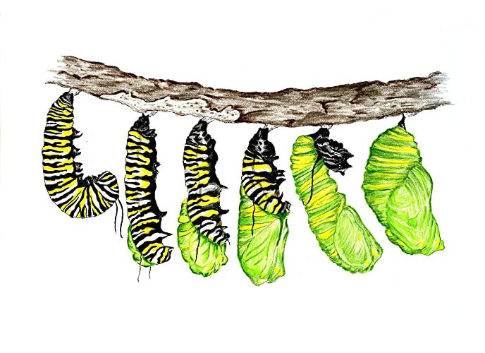 amazon com monarch butterfly caterpillar original decorative art
