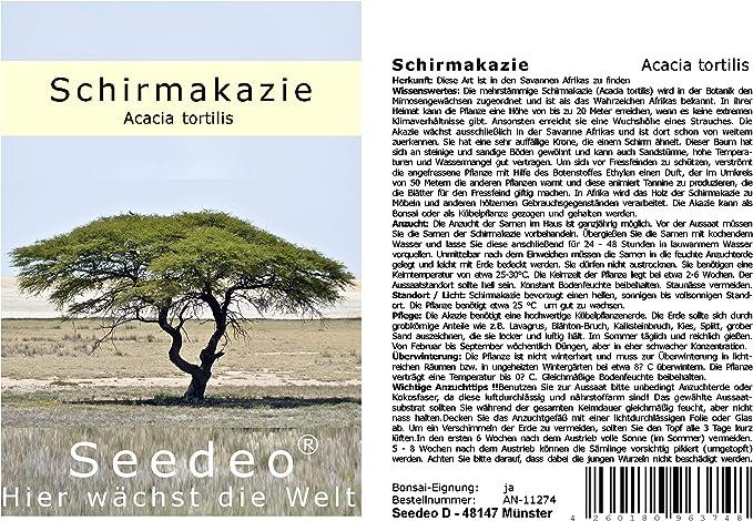 Schirmakazie Acacia tortilis 10 Samen