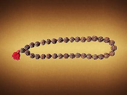 Buy Shiv Yog Plant Seed Rudraksha Kantha (33 6cm X 0cm, Brown