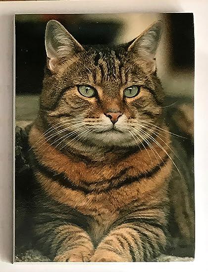 Amante de los gatos regalo – gato atigrado bloc de notas magnético/lista de la