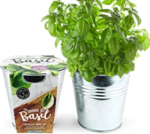 BUZZY Organic Garden Chef Grow Kit | Basil | Delicious Recipe Included | Best Gardening Gifts, Favors, Parties, Events, Unique, and Fun | Growth Guaranteed