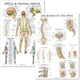 2 Pack: Spinal and Cranial Nerves + Disorders of the Spine Poster Set - Set of 2 Anatomical Charts - Laminated - 18' x…