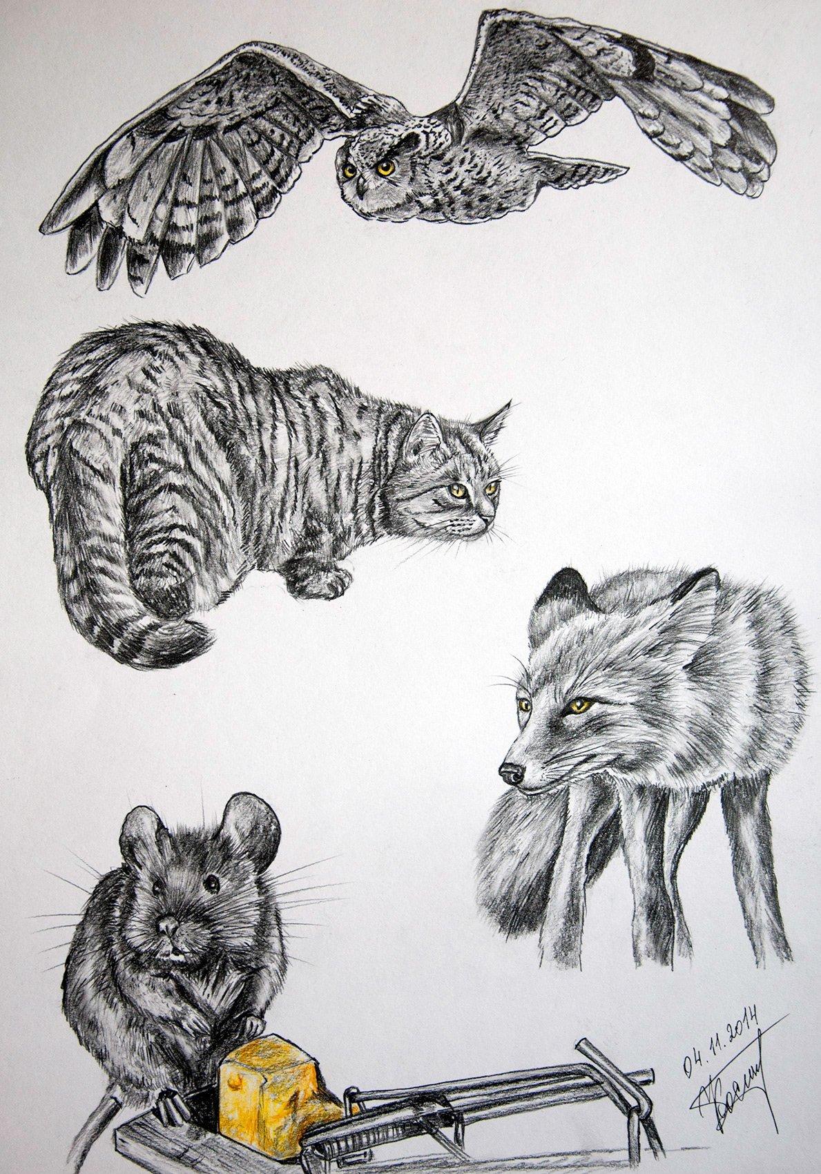 Predators And A Prey pencil original drawing