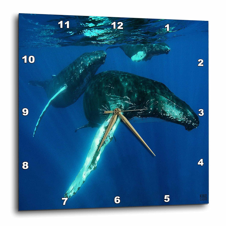3dRose 3D Rose Humpback Whales-Wall Clock, 15-inch (DPP_9943_3)