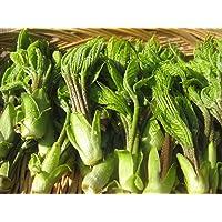 長野県産 春の味覚! 旬の天然山菜 「コシアブラ」 約300g