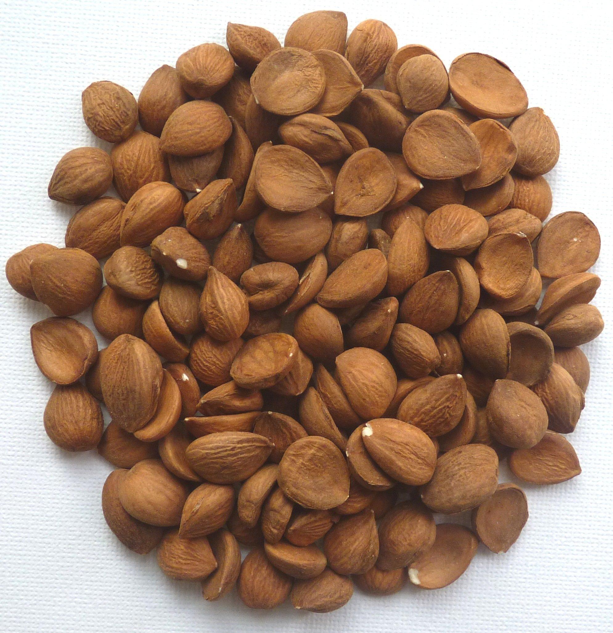 Natural Apricot Kernels Raw (Seeds) 430g Bag 1lb