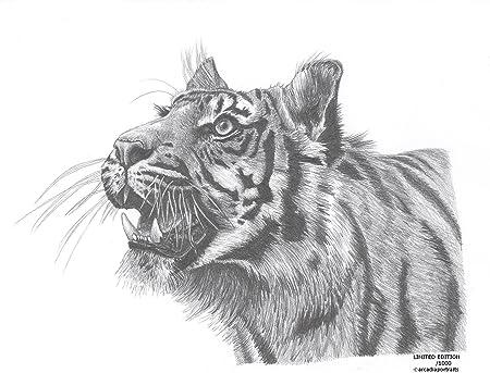 Tete De Tigre Animaux Sauvages Edition Limitee Art Dessin Imprime Signee Par L Artiste Britannique Amazon Fr Cuisine Maison