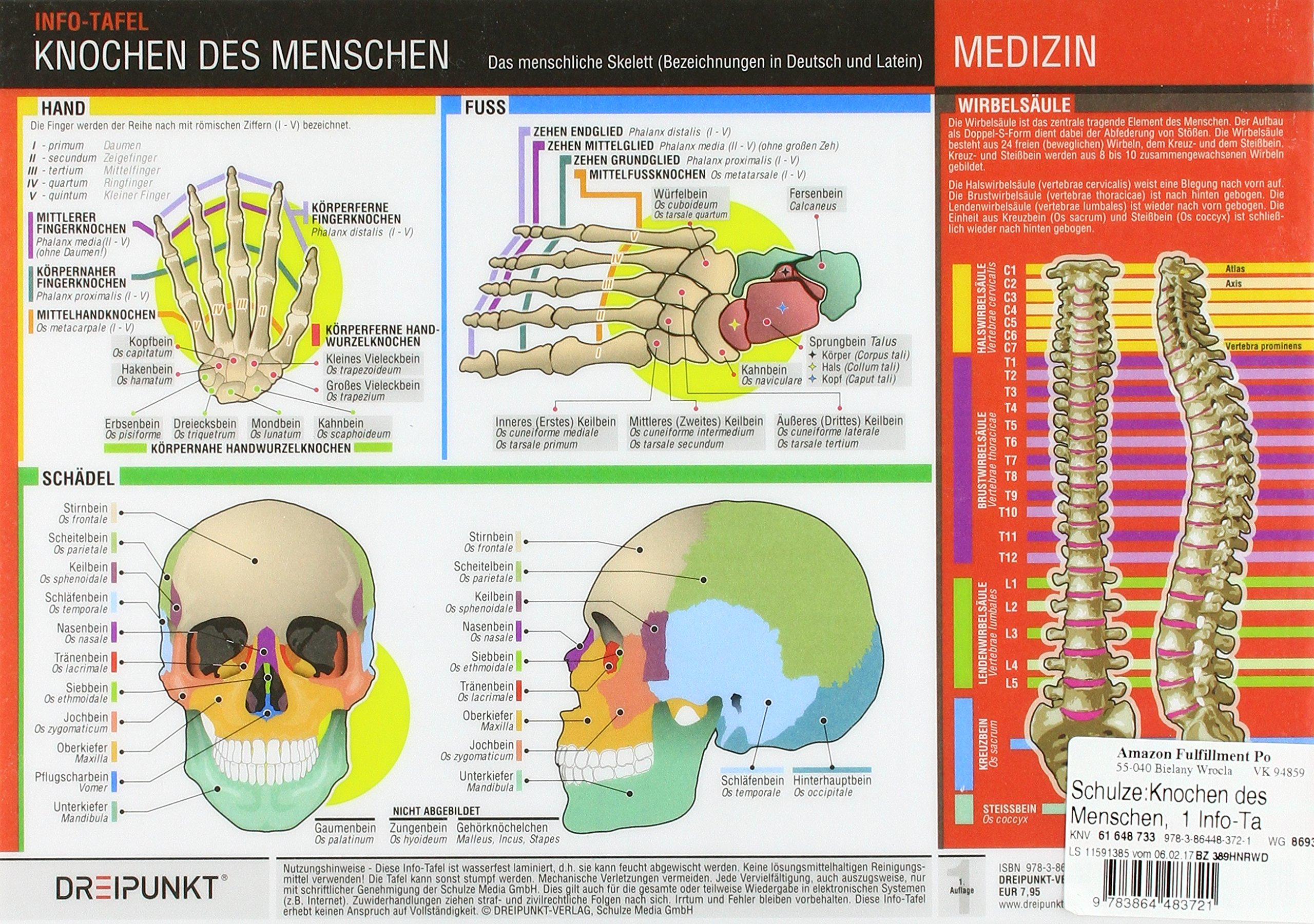 Knochen des Menschen: Die Knochen des menschlichen Skeletts mit ...