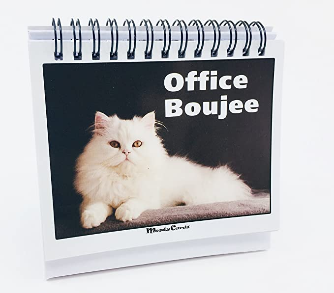 Office Gift for Cat Lovers - Moodycards! Make Everyone Laugh with These Adorable and Hilarious Cat Memes - Let The Kittys Tell Everyone How You Feel! ...