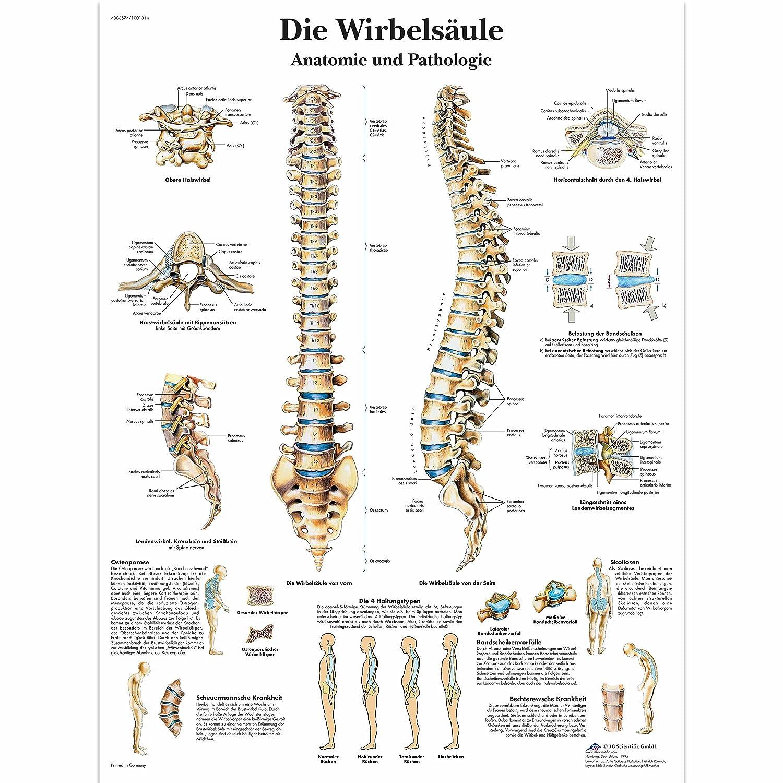 Fantastisch Anatomie Der Praxis Fragen Fotos - Anatomie Ideen ...