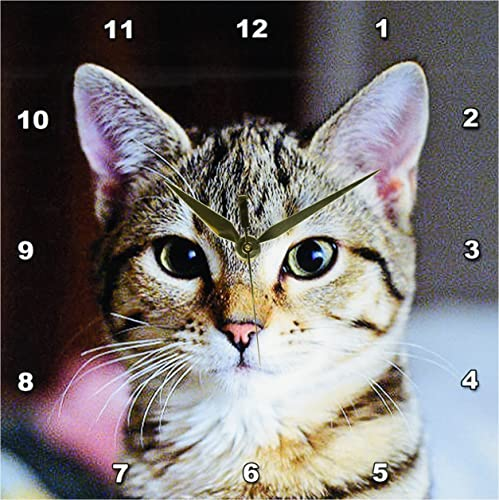 3dRose DPP_46669_1 Hello Kitty Animal, Moggie, Tabbies, Tabby Cat, Cat, Cats, Cute Wall Clock, 10 by 10-Inch