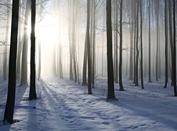 Fototapete Winter Morgen Im Wald 340pp 350x260 Cm In 7 Bahnen