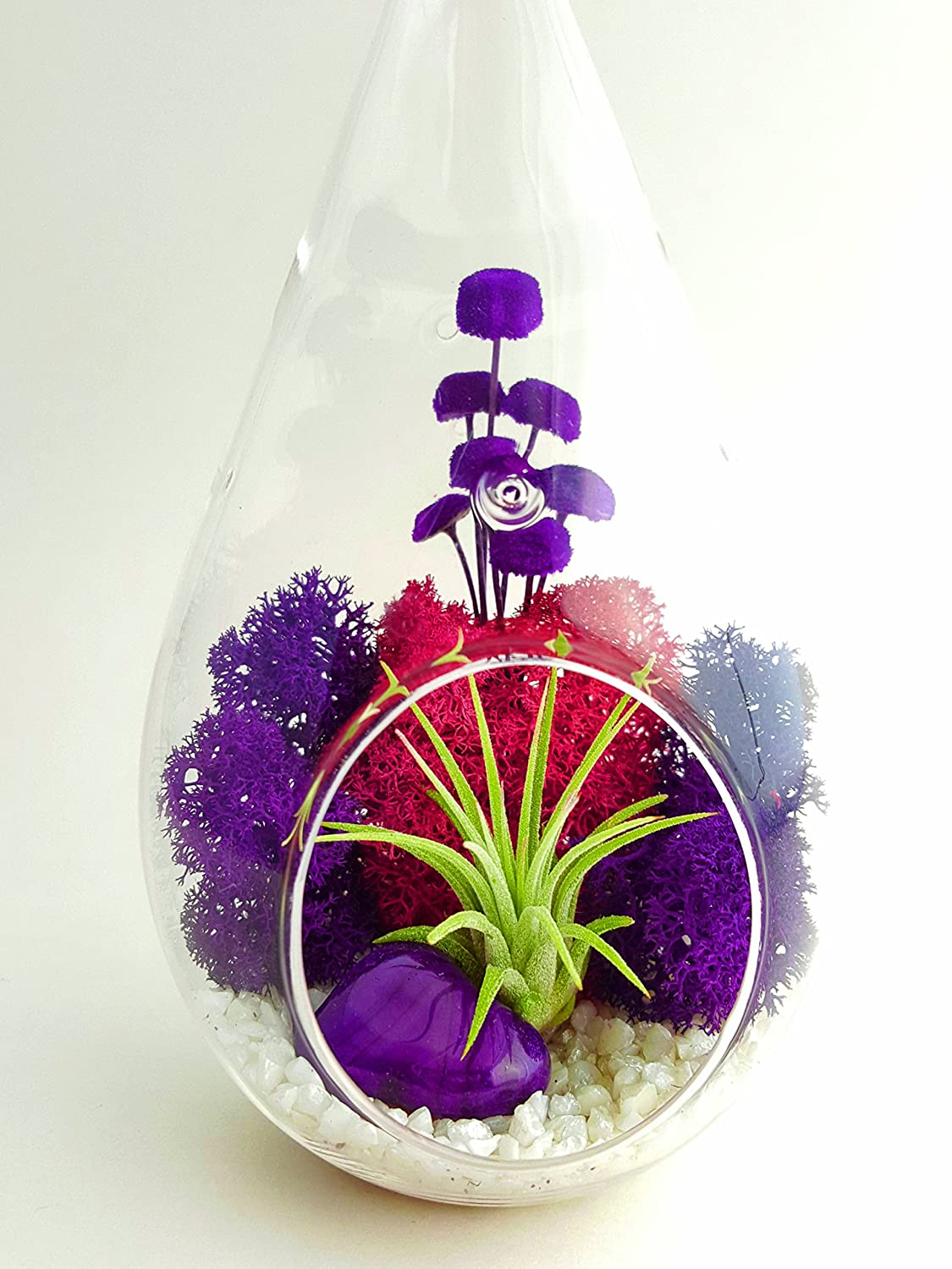 Air Plant Terrarium Amazoncom Bliss Gardens Air Plant Terrarium Kit With 7