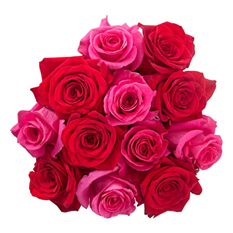 Flowers For Delivery On Amazon PICKER UPPER Bouquet 12 Fresh Roses (Red/Hot  Pink