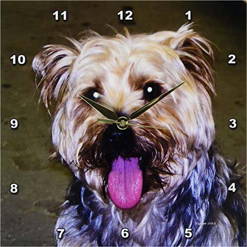 3dRose dpp_22247_1 Silky Terrier Wall Clock, 10 by 10-Inch