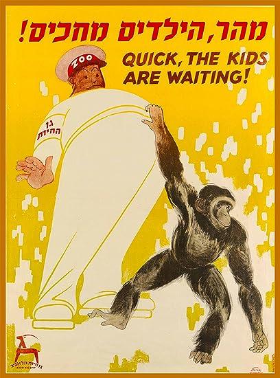 Amazon.com: Zoo Tel-Aviv Chimpanzee Quick, the Kids are Waiting ...