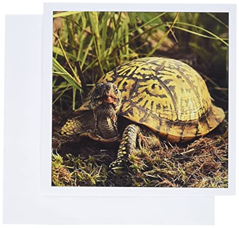 Amazon 3drose eastern box turtle michigan us23 aje0005 3drose eastern box turtle michigan us23 aje0005 adam jones greeting cards m4hsunfo