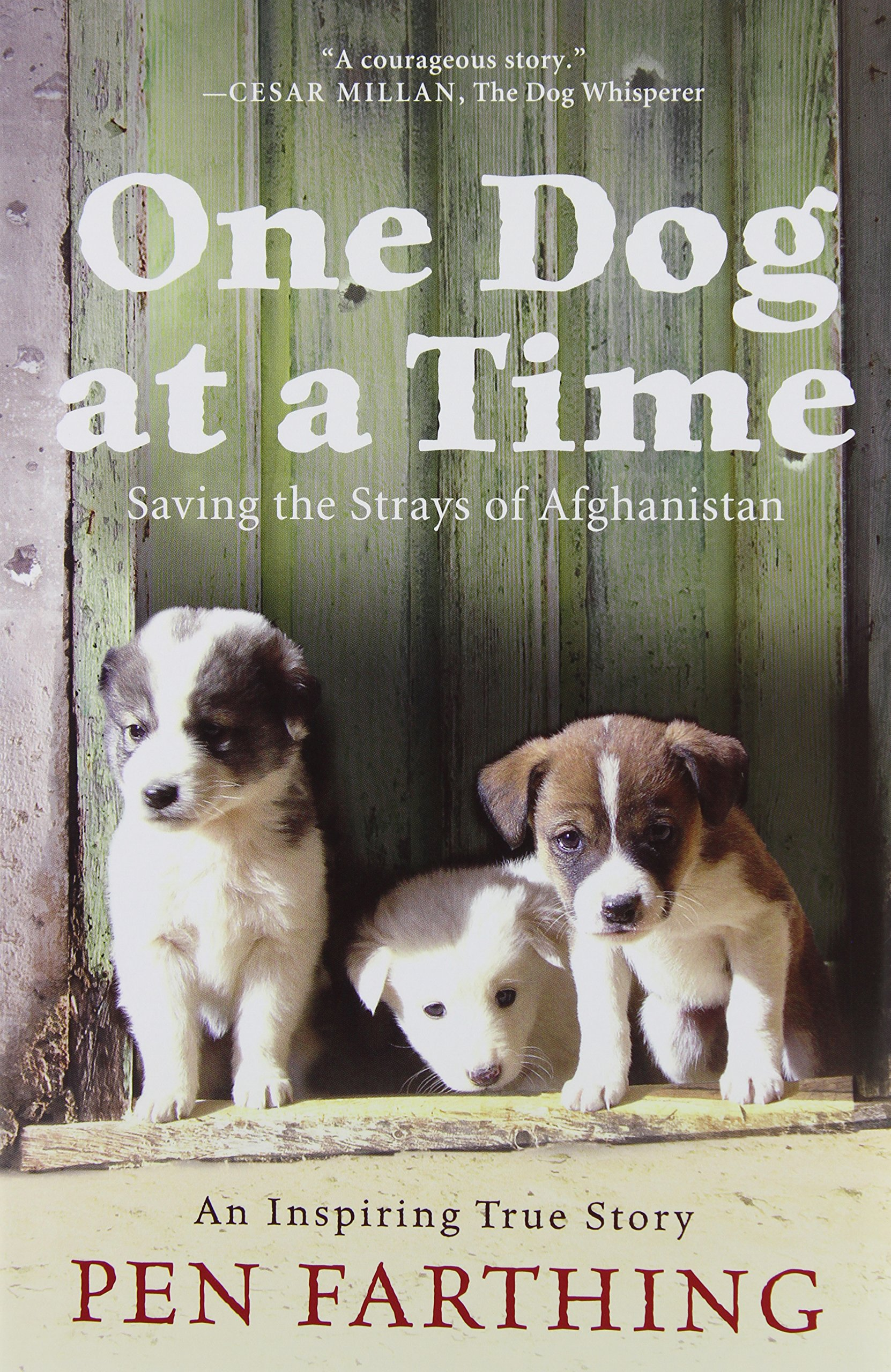 Download One Dog at a Time: Saving the Strays of Afghanistan pdf epub