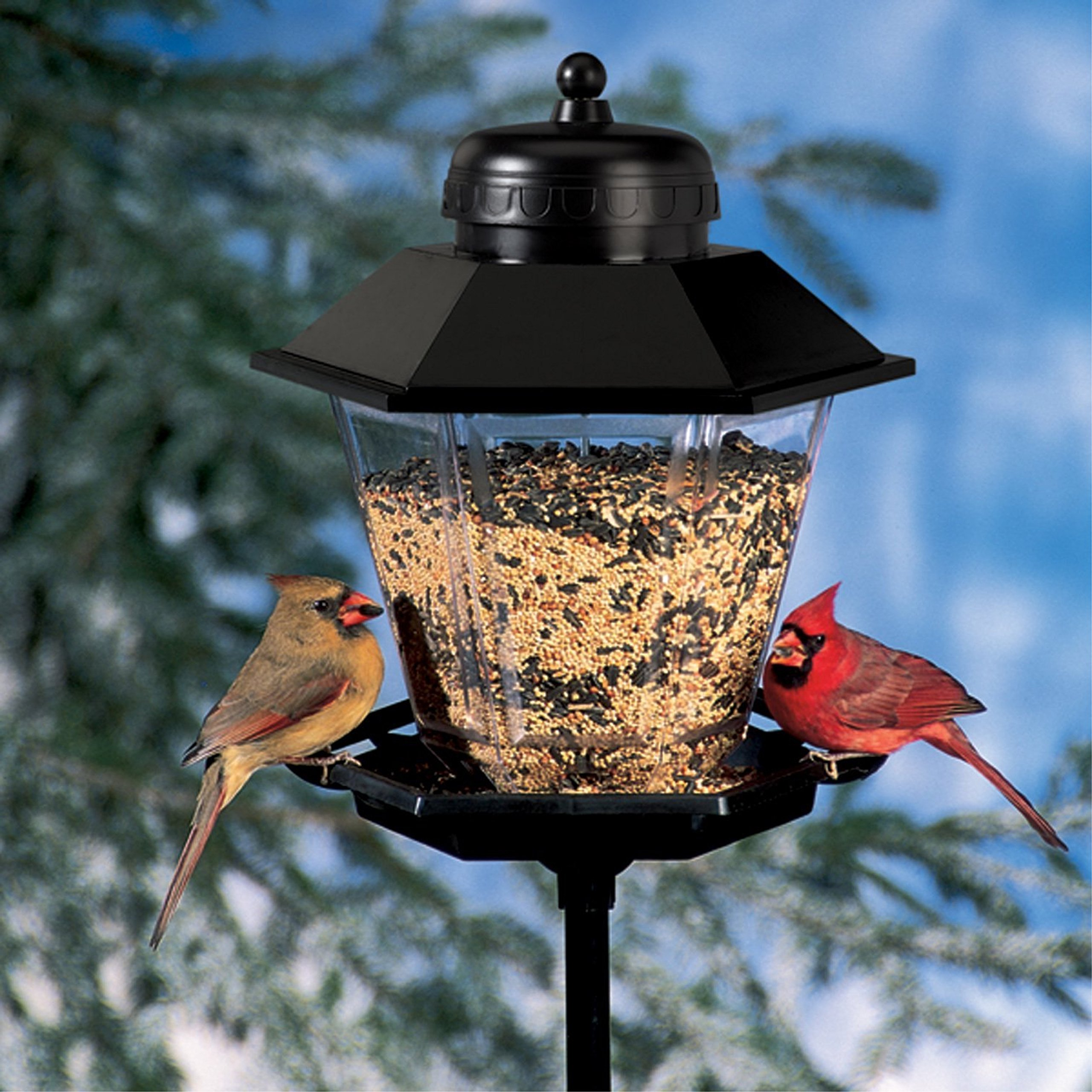 Bird Feeder , 6-feet Steel Pole Lamp Style , 11-Pound Mixed Seed Capacity, Outdoor & eBook by Easy2Find
