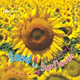Seed to Sunflower (Lifecycles) (Qed Lifecycles)