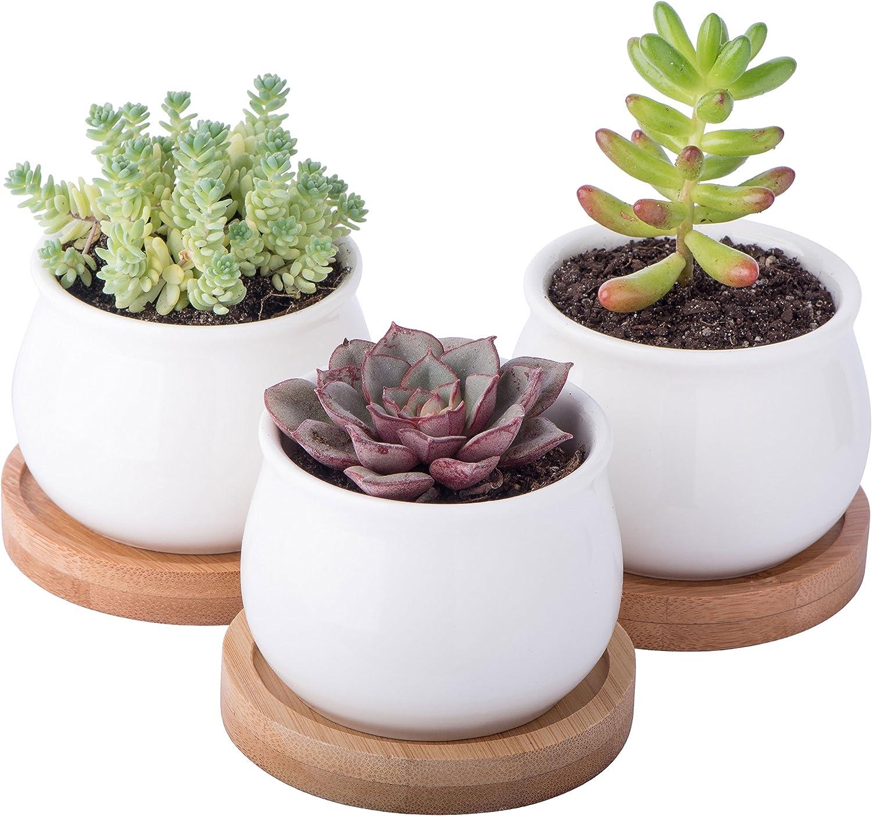 Starpack Premium 3 Piece Mini White Ceramic Succulent Planter Pot Set With Bamboo Bases Kitchen Dining