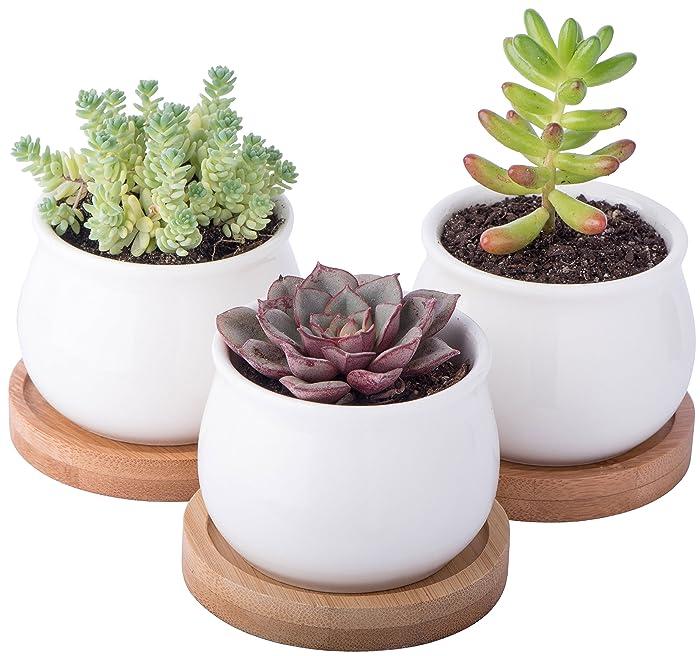 StarPack Premium 3 Piece Mini White Ceramic Succulent Planter Pot Set with Bamboo Bases
