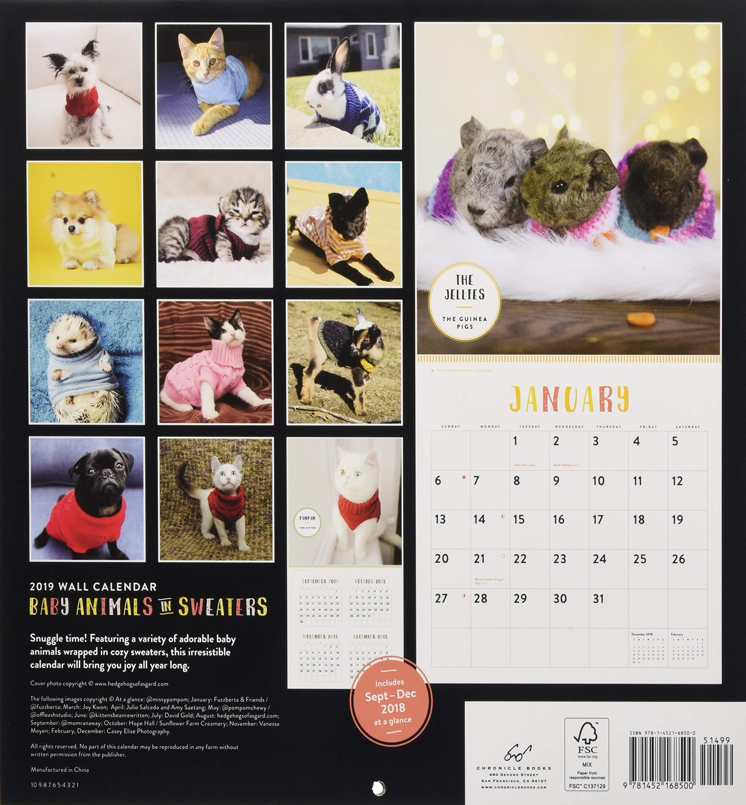 Amazon.com Baby Animals in Sweaters 2019 Wall Calendar