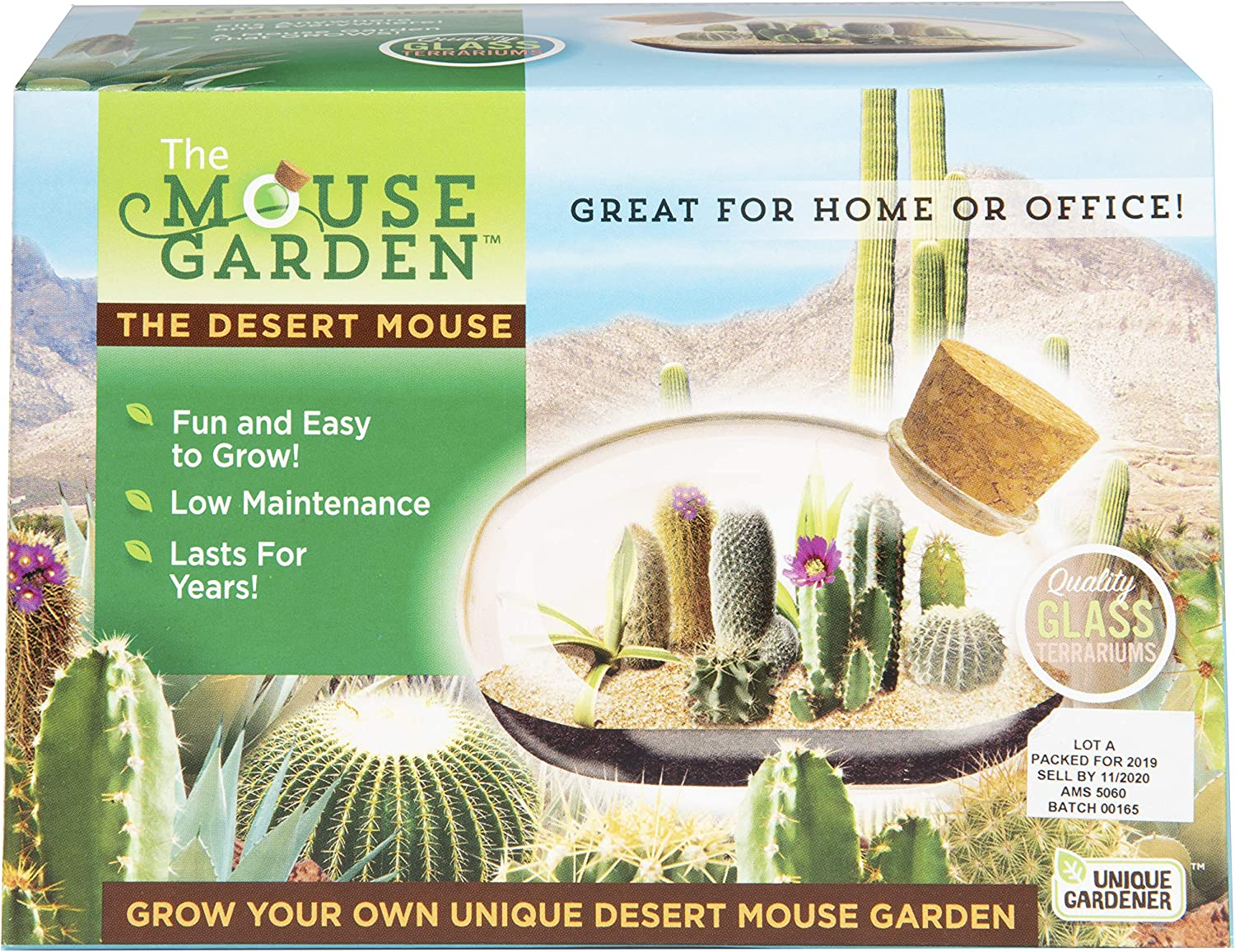Mini Office Cactus Terrarium - The Desert Mouse Tiny Garden - Fun to Grow, Low Maintenance - Perfect for The Office Or Home Tabletop.