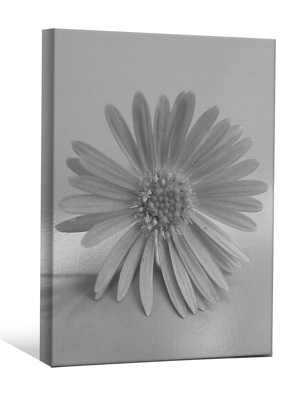 24 x 36 JP London BWMCNV0017 2 Thick Heavyweight Black /& White Gallery Wrap Canvas Natural Flower Gerbera Spring Flowers Wallpaper