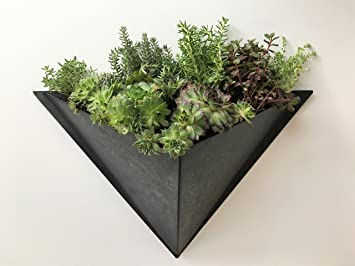 Hanging Wall Planter for Succulents, Herbs or Indoor Plants - Beautiful  Galvanized Wall Decor for