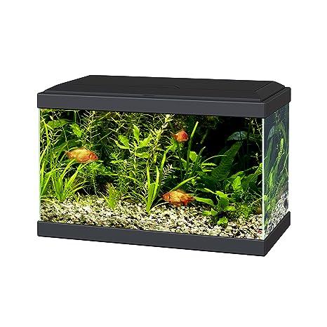 Ciano Aqua 20 acuario con luces LED y filtro negro.