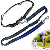 Zenify Hands Free Dog Lead for Running, Walking, Hiking, Canicross Dual Handle Comfortable Waist Belt Leash Band Reflective Stitching Adjustable Bungee Length Extendable Leash 125cm - 190cm (Grey/Blue)